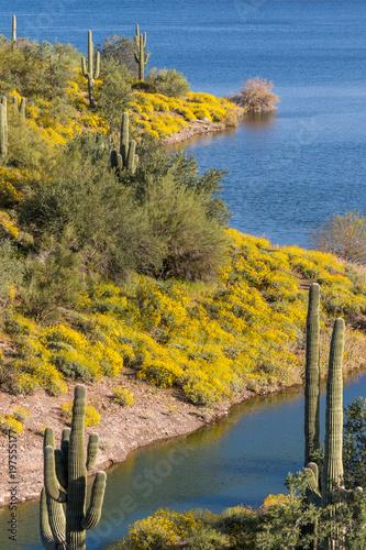 Fotobehang Meloen Wildflowers in Spring in the Arizona Desert