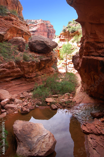 Foto op Plexiglas Bruin Limpid pristine canyon oasis pool in the Bears Ears wilderness in Southern Utah.