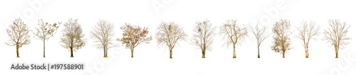 Set of dry tree shape and Tree branch on white background for isolated, Multiple dead tree on white background with clipping path. - 197588901