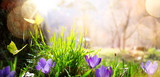 abstract nature spring Background; spring flower and butterfly - 197607173
