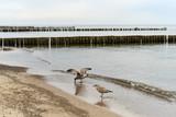 Ostseeküste und Strand bei Regenwetter