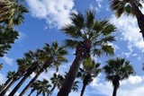 Palm trees.Marmaris.Turkey - 197665344