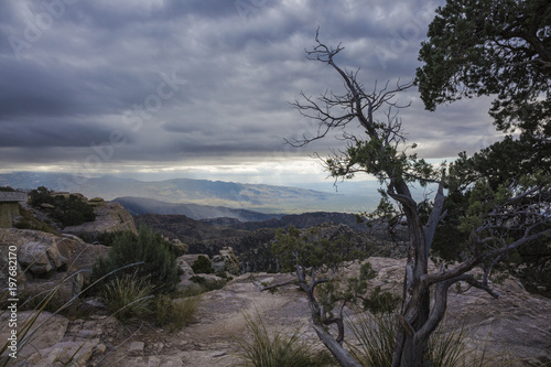 Fotobehang Arizona A somber scene taken on a cloudy day in the Santa Catalina Mountains. Rock formations and tree silhouette visible.