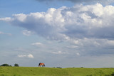 horse grazing on pasture over blue sky