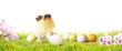 Leinwanddruck Bild - Ostern Küken Motiv