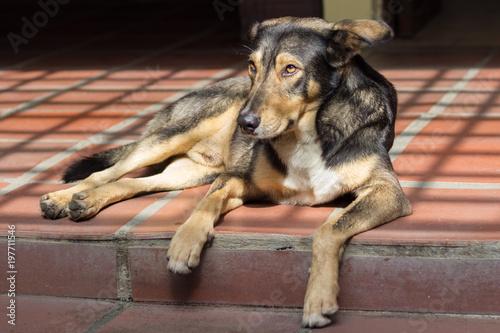 beautiful dog - 197711546
