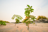 Little green tree growing up in sand at sunset - 197712758