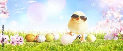 Leinwanddruck Bild Ostern Küken Motiv