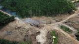 Deforestation - environmental destruction. Rainforest cuting down and burning forest trees - 197724744