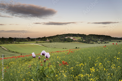 Foto op Canvas Beige Stunning vibrant poppy field landscape at sunset