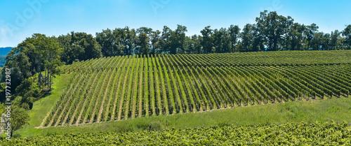 Saint-Emilion-Vineyard landscape-Vineyard south west of France