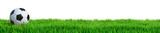Fußball auf Rasen Panorama isoliert weißer Hintergrund 3D Rendering - 197734535