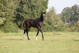 dark colt