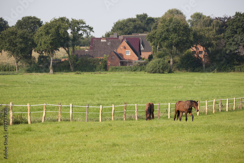 Fotobehang Paarden two young horses on pasture