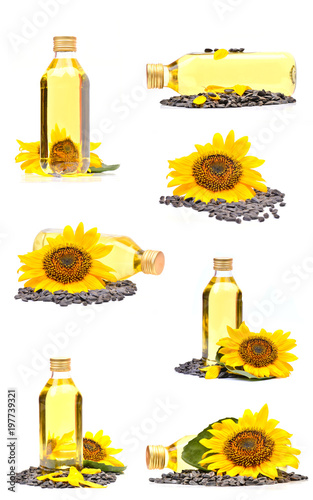 Sunflower, seed and oil collection on a white background