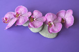 Spa stones and beautiful purple orchid flowers on a topical violet background.