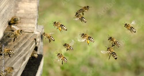 In de dag Bee Am Bienenstock