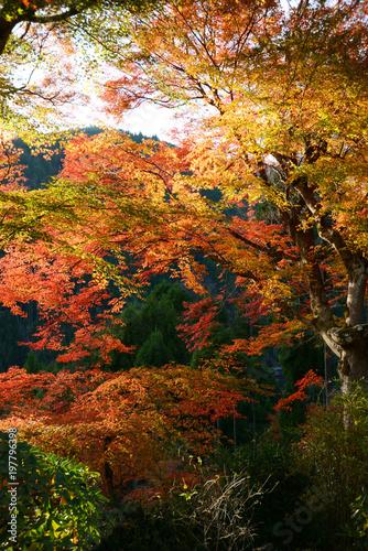 日本 紅葉と落ち葉と京都の秋 Kyoto - 197796398