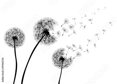 Abstract Dandelions dandelion with flying seeds – stock vector - 197803738