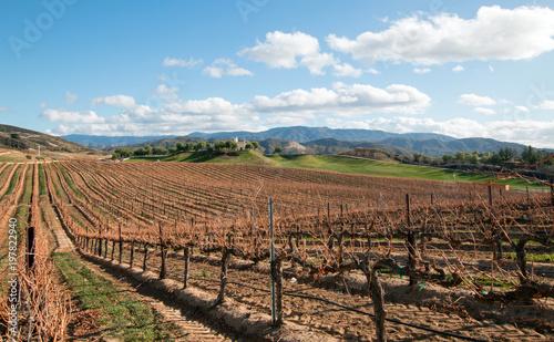Deurstickers Wijngaard Vineyard in California wine growing region in the United States