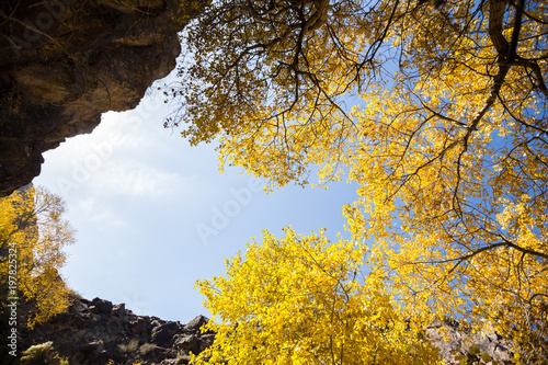 Foto op Canvas Herfst Golden autumn trees in semi-arid zone Charyn
