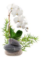 composition florale, bambou, orchidée, galets
