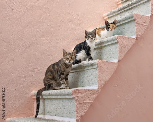 Fotobehang Kat Three cats on a pink stairway, Chios, Greece, Europe