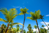 Green palm shore of the Caribbean Sea on a sunny day on a background of blue sky - 197865919
