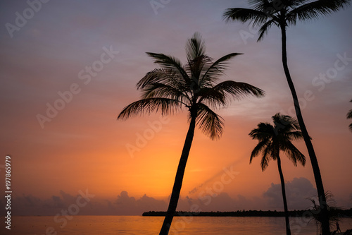 Foto Murales Beautiful sunset with dark silhouettes of palm trees and amazing cloudy sky in tropical island