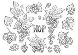 Graphic hops collection - 197878991