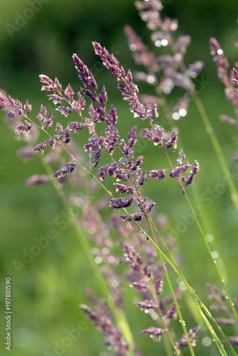 Fotobehang Lavendel Fleurs colorées, France