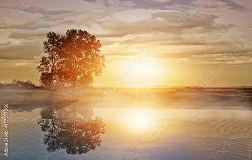 ranku-widok-samotny-drzewo-odbija-w-wa