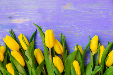 tulips overhead on purple wooden background. copy space