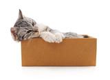 Gray kitten in a box.