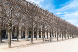 Paris, gardens of Palais Royal, public garden, beautiful perspective of an alley in springtime