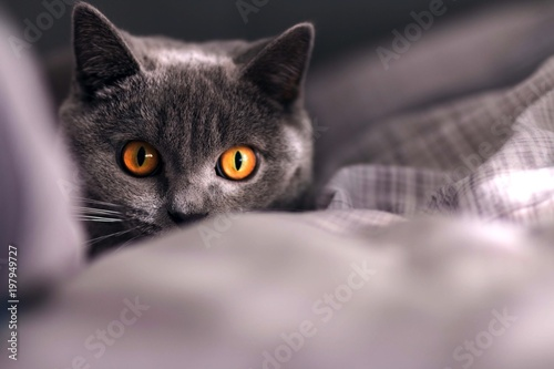 Ukrywanie kota