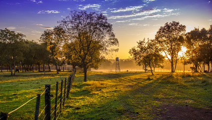amanecer, campo