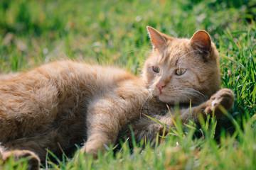 Cat relaxing outdoor