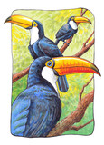 Hand-drawn illustration of toucans in the frame