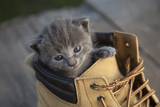 kitten with smoky color and blue eyes in the boot, in the nature on the background of summer green