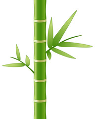 Bamboo stem and leaves, vector illustration
