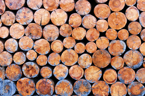 Foto op Aluminium Brandhout textuur Round wood stump background. Heartwood texture for decoration walls in cafe. Stacked logs