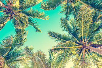 Blue sky and palm trees view from below, vintage style, summer background