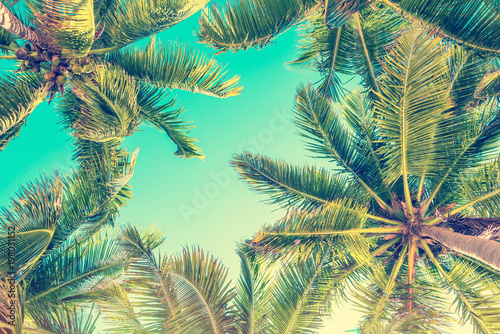 Blue sky and palm trees view from below, vintage style, summer background - 198031152