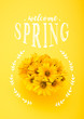 Top view of beautiful chrysanthemum flowers with WELCOME SPRING lettering isolated on yellow