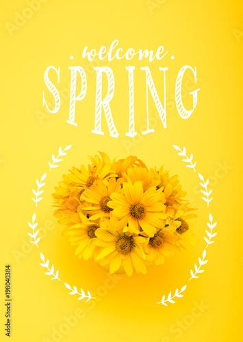 Odgórny widok piękni chryzantema kwiaty z powitania wiosny literowaniem odizolowywającym na kolorze żółtym