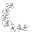 vector contour orchids flower half circle frame border coloring book