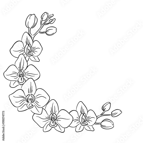 vector contour orchids flower half circle frame border coloring book - 198074773