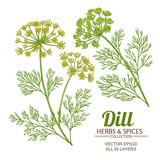 dill plant vector set - 198079300