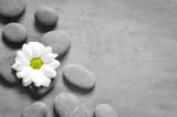 Set of white flower on pebble - 198092322